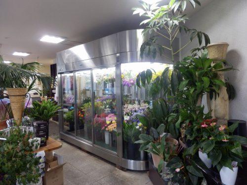 店内は切り花だけでなく、観葉植物、エアープランツ、多肉植物とありとあらゆる植物に囲まれた、わくわくする空間になっている